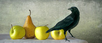 Crow with Apples and Pear