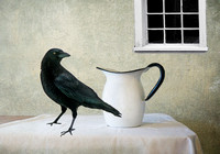 Crow with Pitcher